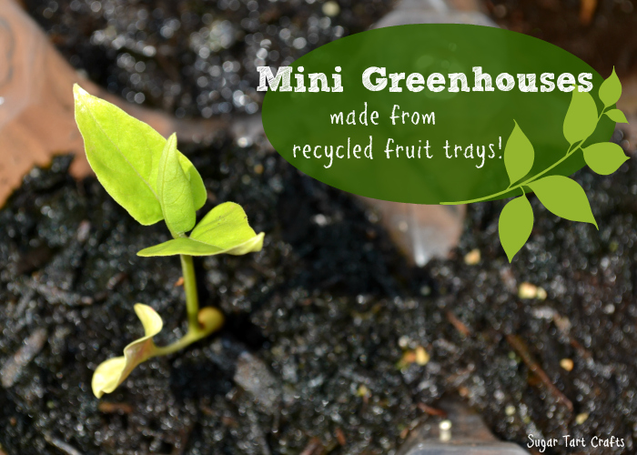 Get your garden started with these mini greenhouses made from recycled fruit trays